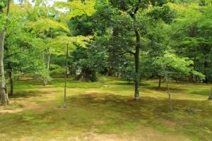 京都訪問ブログ4|金閣寺8