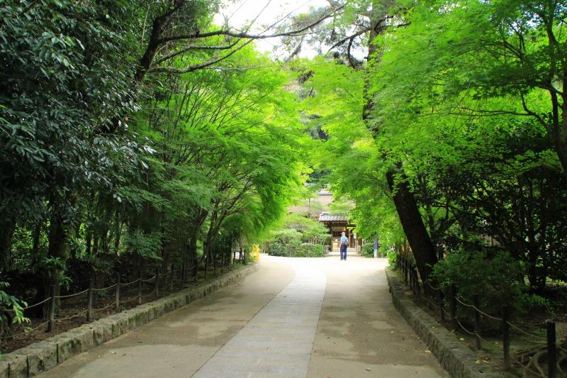 京都訪問ブログ10|宇治上神社10