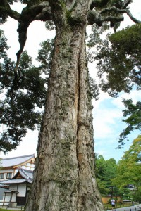 京都訪問ブログ4|金閣寺10
