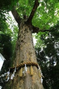 京都訪問ブログ10|宇治上神社14