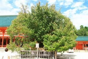 京都訪問ブログ11|平安神宮14