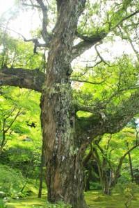 京都訪問ブログ5|銀閣寺14