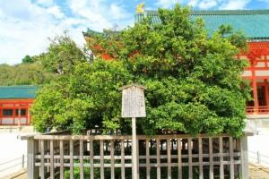 京都訪問ブログ11|平安神宮15
