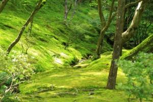 京都訪問ブログ5|銀閣寺15