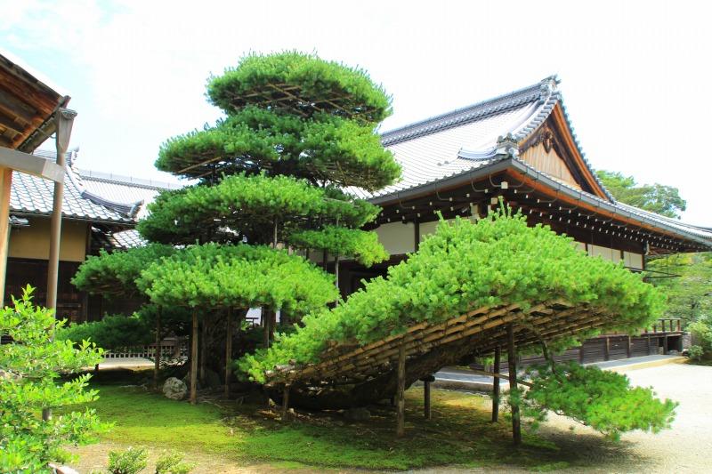 京都訪問ブログ4|金閣寺16