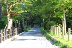 京都訪問ブログ9|哲学の道6
