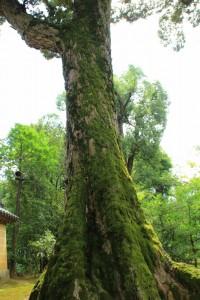 京都訪問ブログ4|金閣寺5