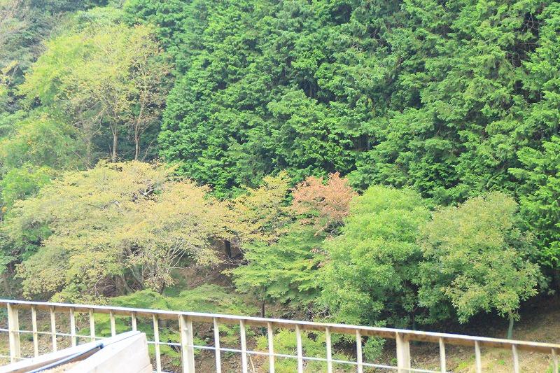 京都訪問ブログ18|嵐山トロッコ列車18