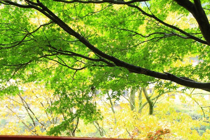 京都訪問ブログ18|嵐山トロッコ列車14