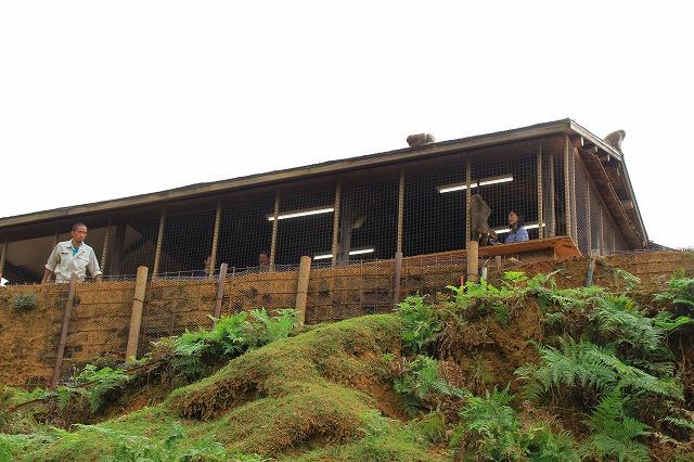 京都訪問ブログ21|嵐山モンキーパークいわたやま11