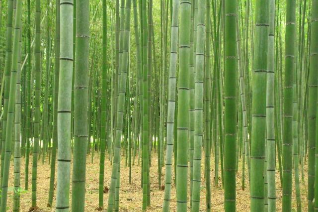 京都観光ブログ|嵐山散策12