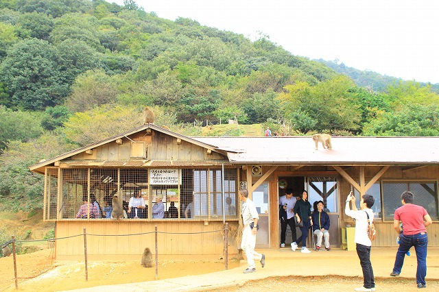 京都訪問ブログ21|嵐山モンキーパークいわたやま18
