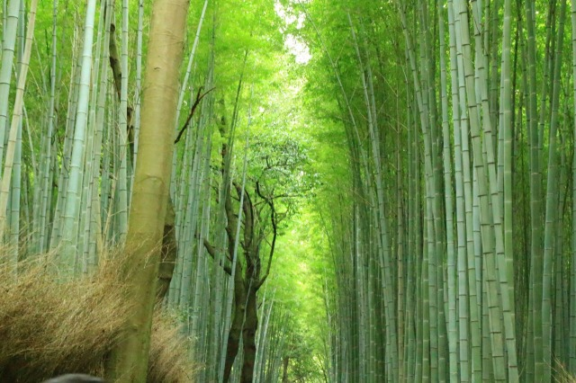 京都観光ブログ|嵐山散策14