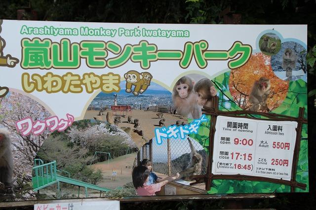 京都訪問ブログ21|嵐山モンキーパークいわたやま3