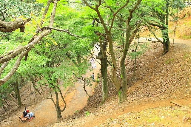 京都訪問ブログ21|嵐山モンキーパークいわたやま31