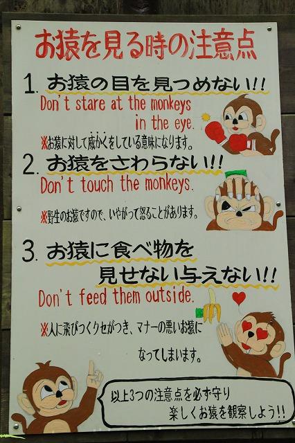 京都訪問ブログ21|嵐山モンキーパークいわたやま9