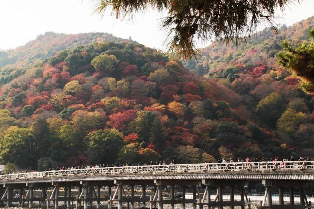 京都観光ブログ|嵐山散策26