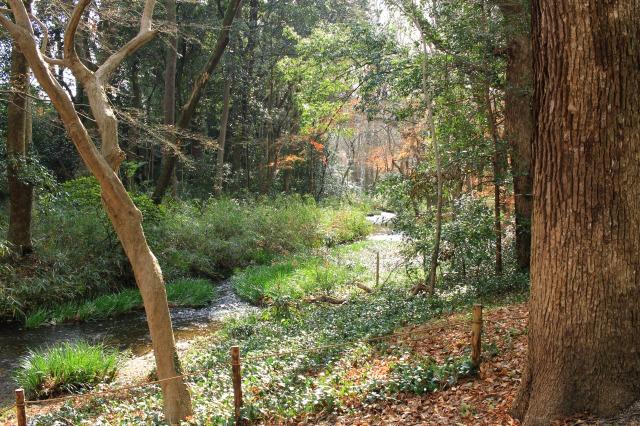 京都観光ブログ27|下鴨神社、相生社、河合神社26