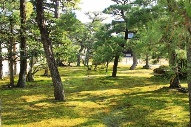 京都観光ブログ26|二条城16
