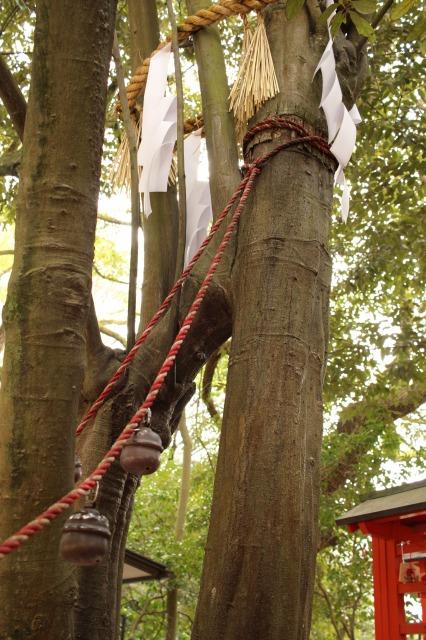 京都観光ブログ27|下鴨神社、相生社、河合神社23
