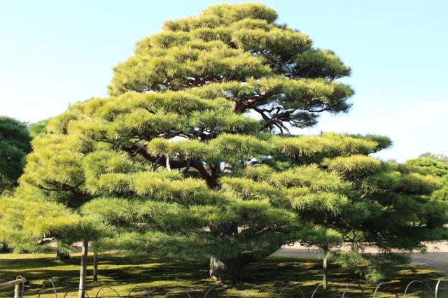 京都観光ブログ26|二条城5