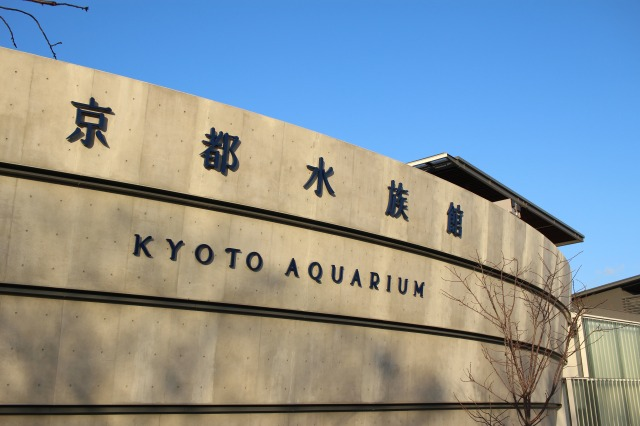 京都観光ブログ30|京都水族館3