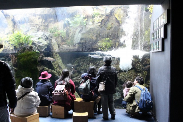 京都観光ブログ30|京都水族館10