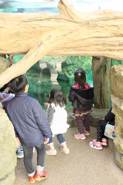 京都観光ブログ30|京都水族館12