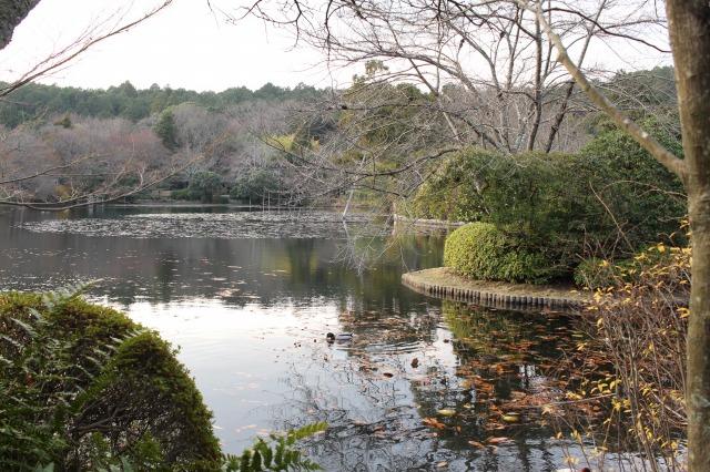 京都観光ブログ31|龍安寺3