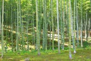 京都観光フォトブログ43|天龍寺19
