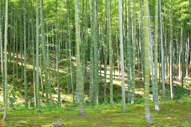 京都観光フォトブログ43 天龍寺19