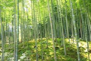京都観光フォトブログ43|天龍寺20