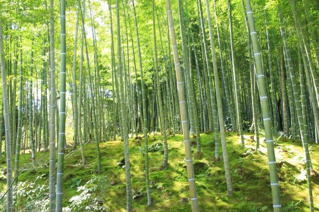 京都観光フォトブログ43 天龍寺20