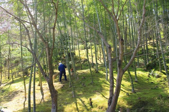京都観光フォトブログ43 天龍寺21