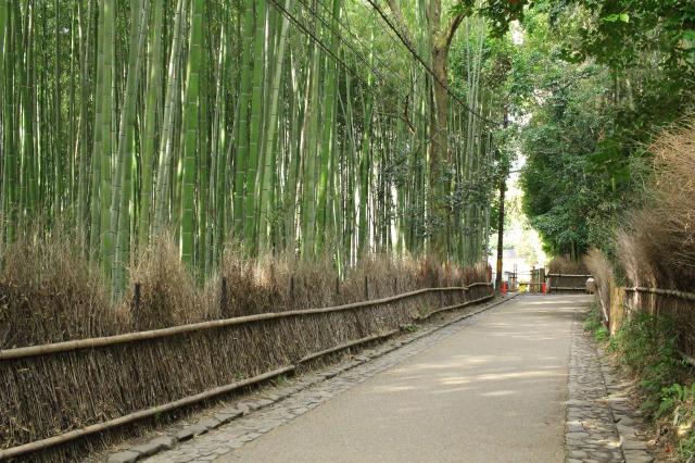 京都観光ブログ38|竹林の小径4