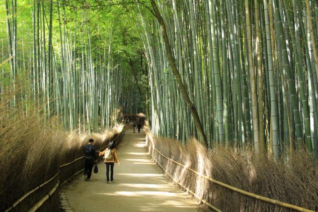 京都観光ブログ38|竹林の小径6