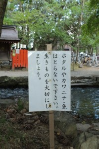 京都訪問フォトブログ|子どもが喜ぶ京都鴨川の川遊びスポット8