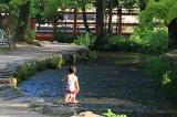 上賀茂神社 ホタルも生息する抜群の透明度の川で水遊び   京都の観光と子どもの遊び場150ヶ所以上の訪問体...