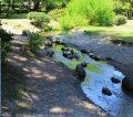 京都御苑の出水の小川|井戸水の清流で川遊び!