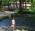 上賀茂神社|ホタルも生息する抜群の透明度の川で水遊び