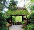 祇王寺へ行ってきた!嵐山嵯峨にある苔が美しい寺
