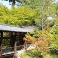 東山区|高台寺へ行ってきた!|秀吉のためにねねが開創した寺